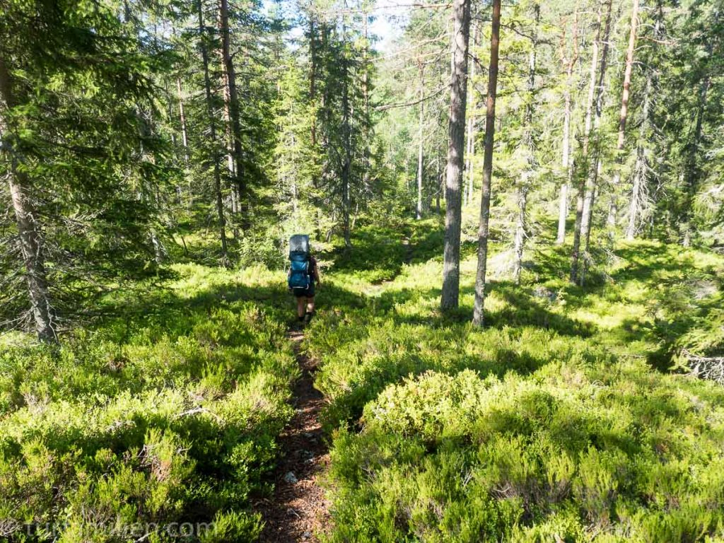 På skogssti langs bergslagsleden
