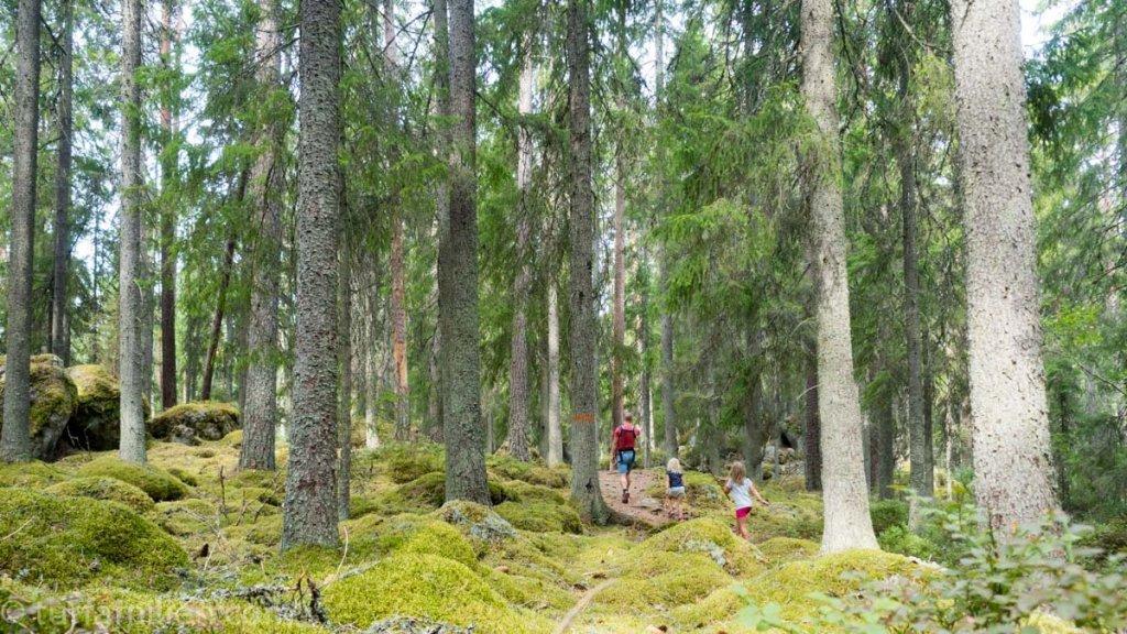 fasaskogen og stien til jätteberget