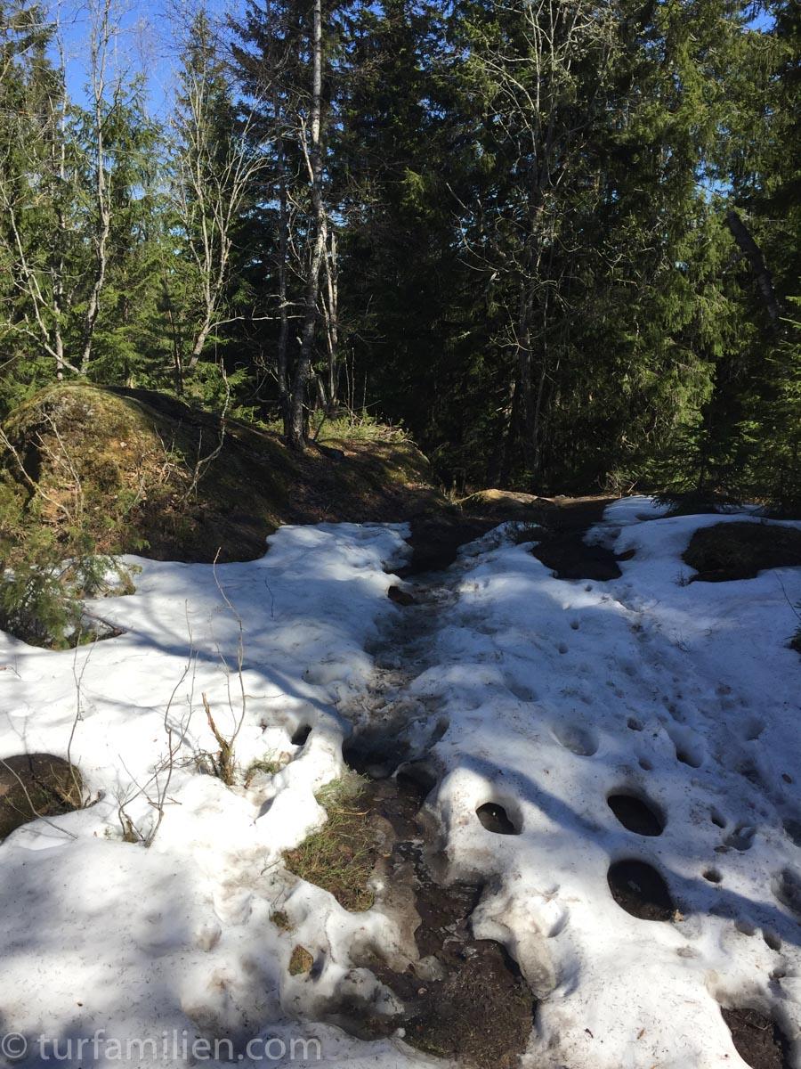 skogsterreng i skaugumåsen