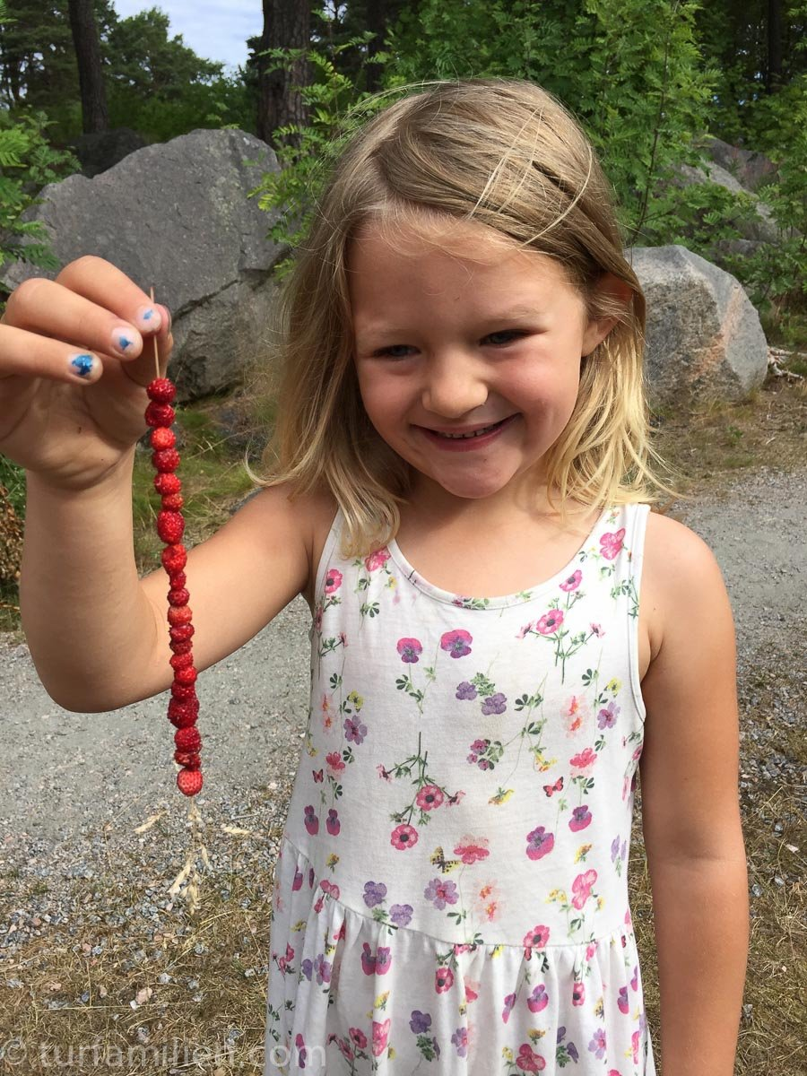 plukke markjordbær i skogen