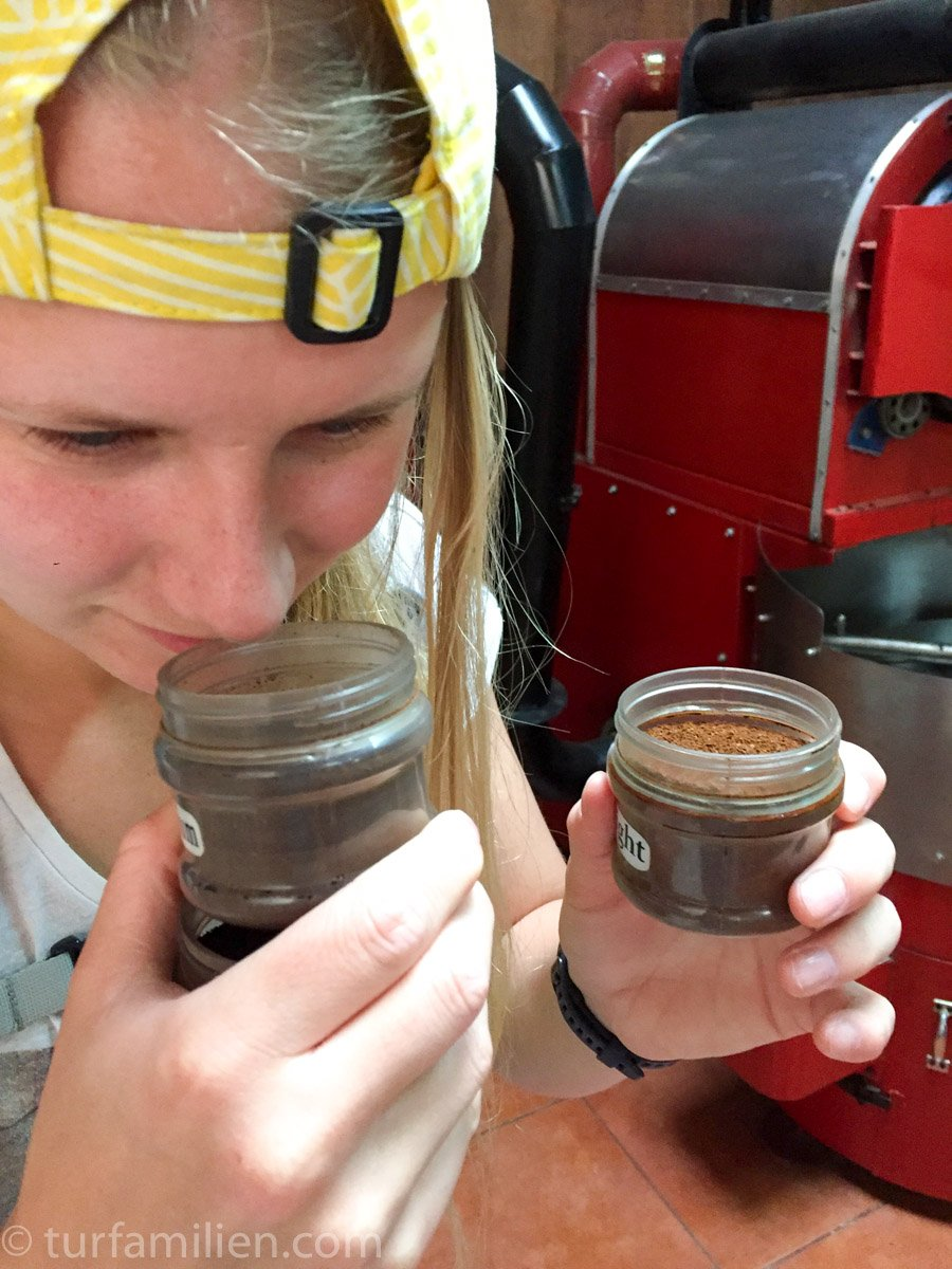 fersk kaffe på kaffeplantasje